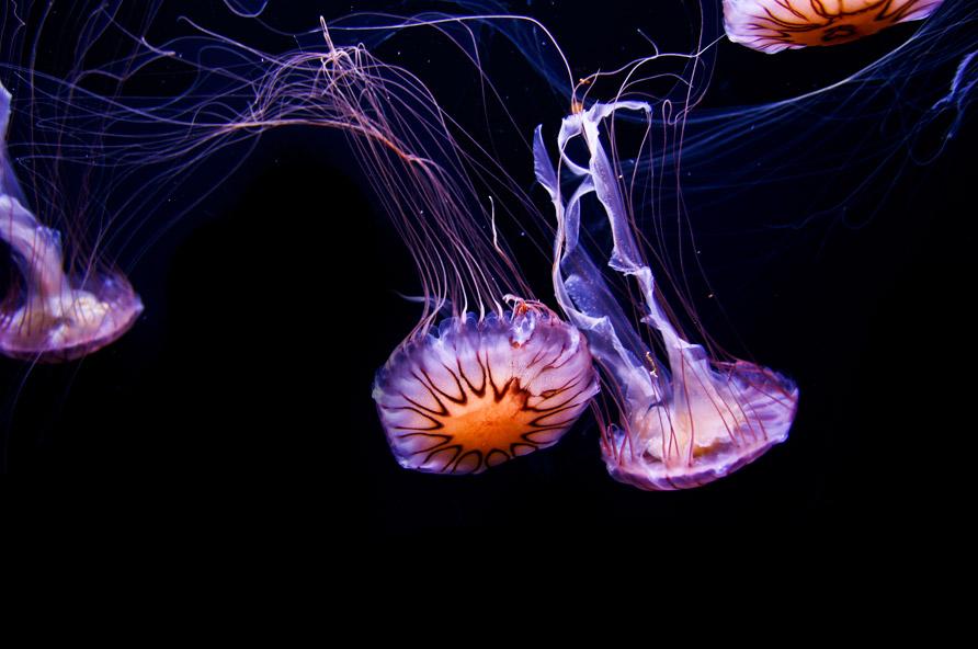 medusas2