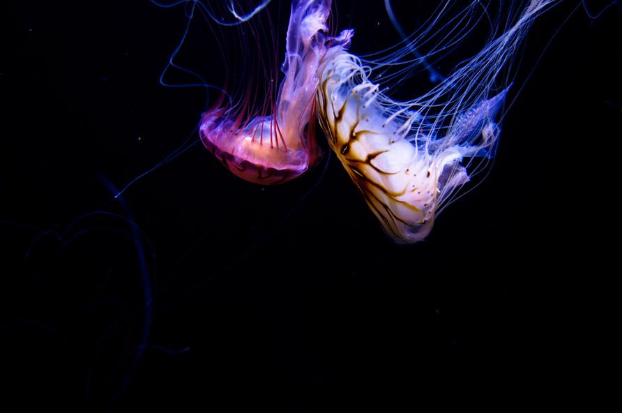 medusas5